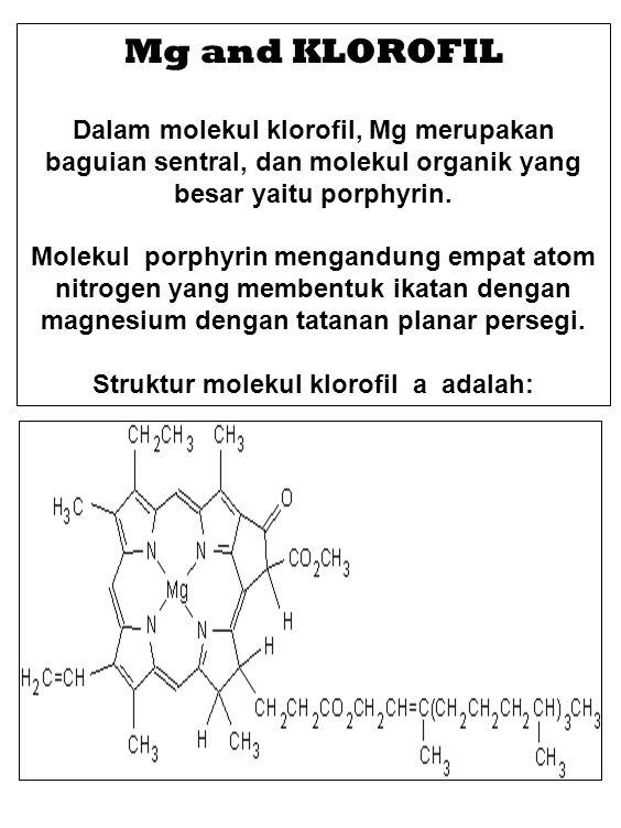 Struktur molekul klorofil a adalah: