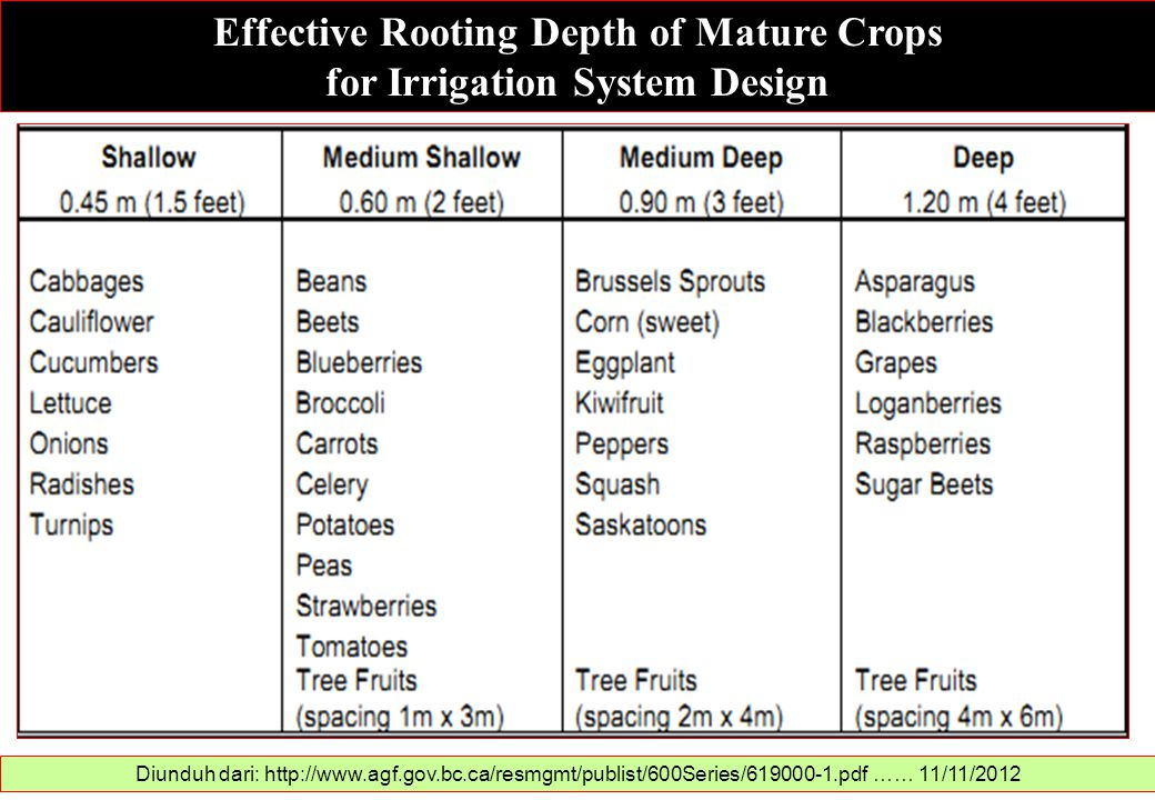Effective Rooting Depth of Mature Crops for Irrigation System Design