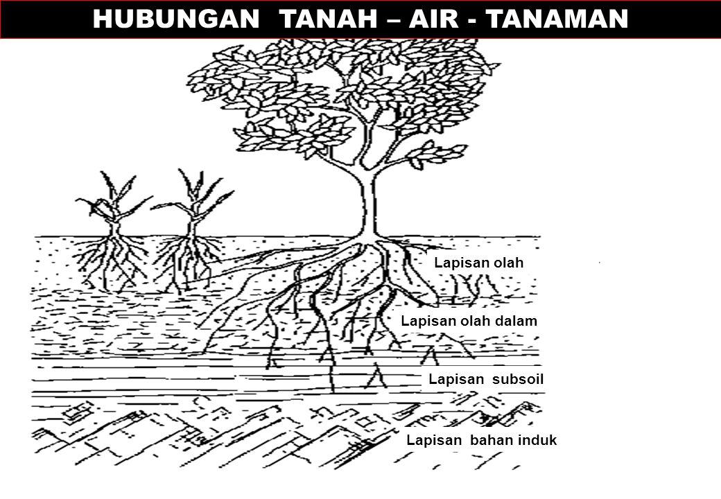 HUBUNGAN TANAH – AIR - TANAMAN
