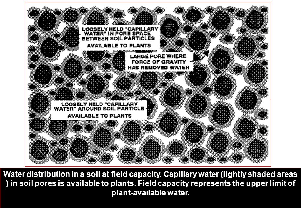 Water distribution in a soil at field capacity