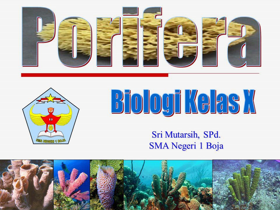 Porifera Biologi Kelas X Sri Mutarsih, SPd. SMA Negeri 1 Boja