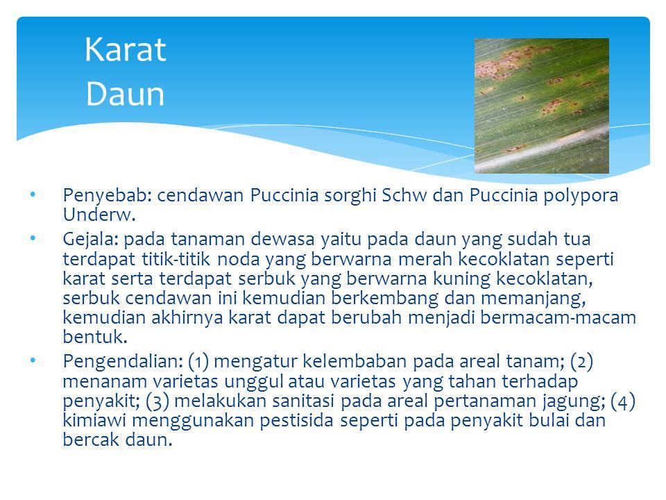 Karat Daun Penyebab: cendawan Puccinia sorghi Schw dan Puccinia polypora Underw.