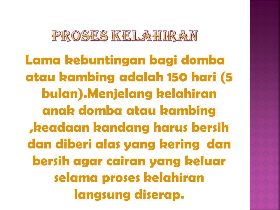 PROSES KELAHIRAN