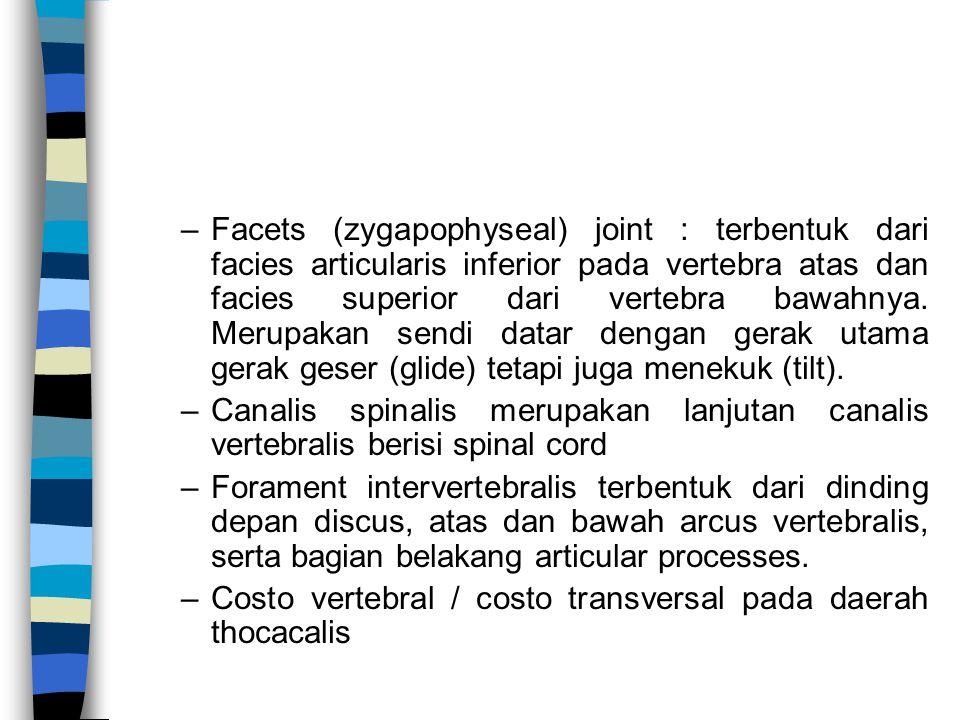 Facets (zygapophyseal) joint : terbentuk dari facies articularis inferior pada vertebra atas dan facies superior dari vertebra bawahnya. Merupakan sendi datar dengan gerak utama gerak geser (glide) tetapi juga menekuk (tilt).