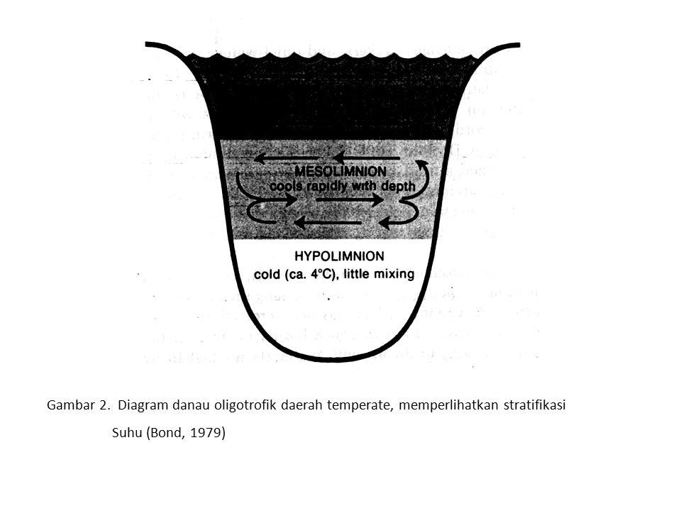 Gambar 2. Diagram danau oligotrofik daerah temperate, memperlihatkan stratifikasi