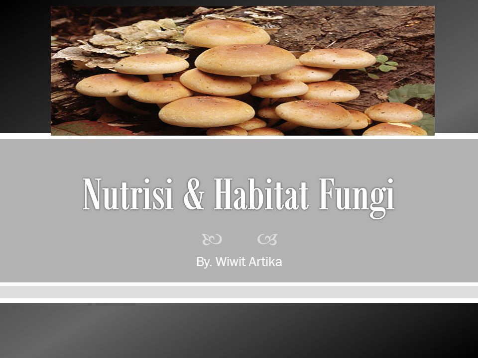 Nutrisi & Habitat Fungi