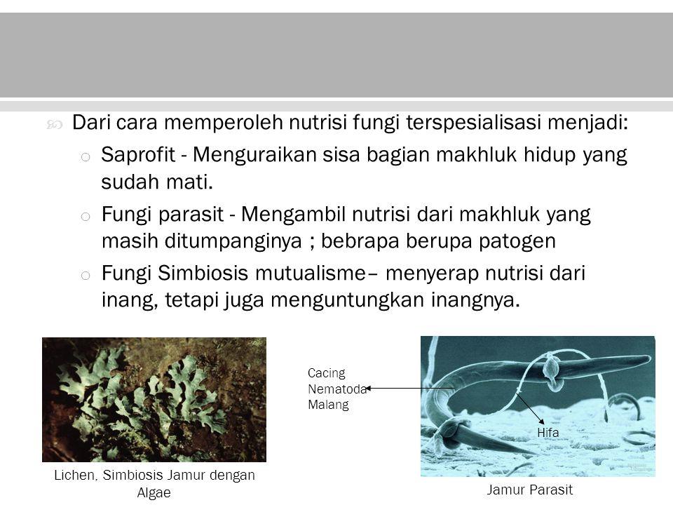Lichen, Simbiosis Jamur dengan Algae