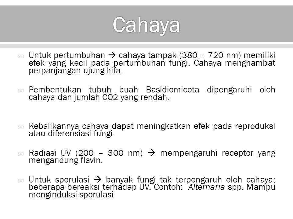 Cahaya Untuk pertumbuhan  cahaya tampak (380 – 720 nm) memiliki efek yang kecil pada pertumbuhan fungi. Cahaya menghambat perpanjangan ujung hifa.
