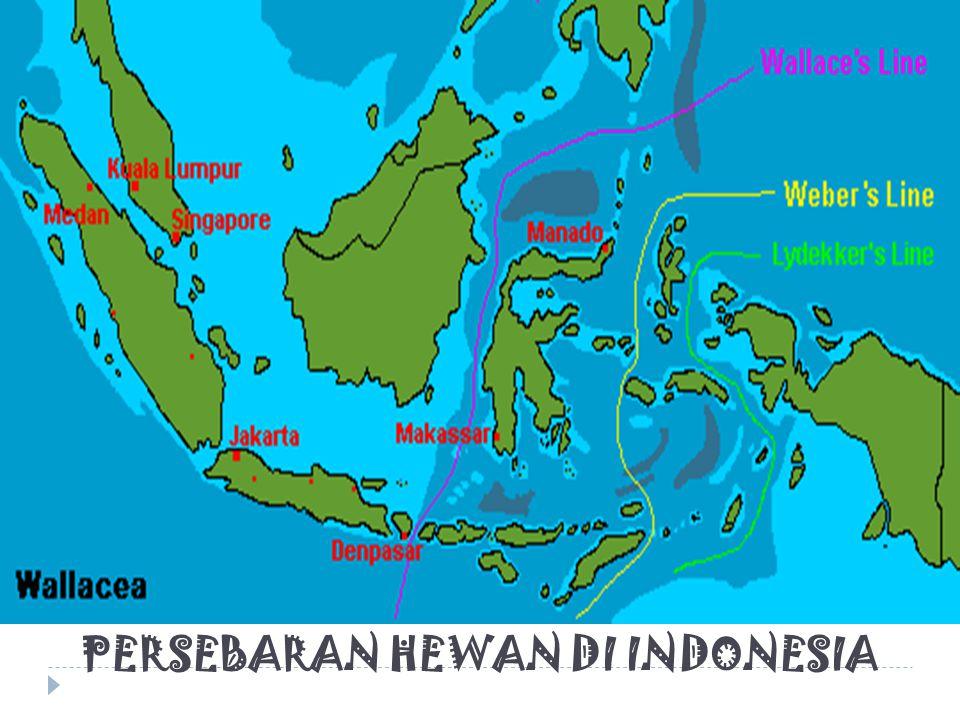 PERSEBARAN HEWAN DI INDONESIA