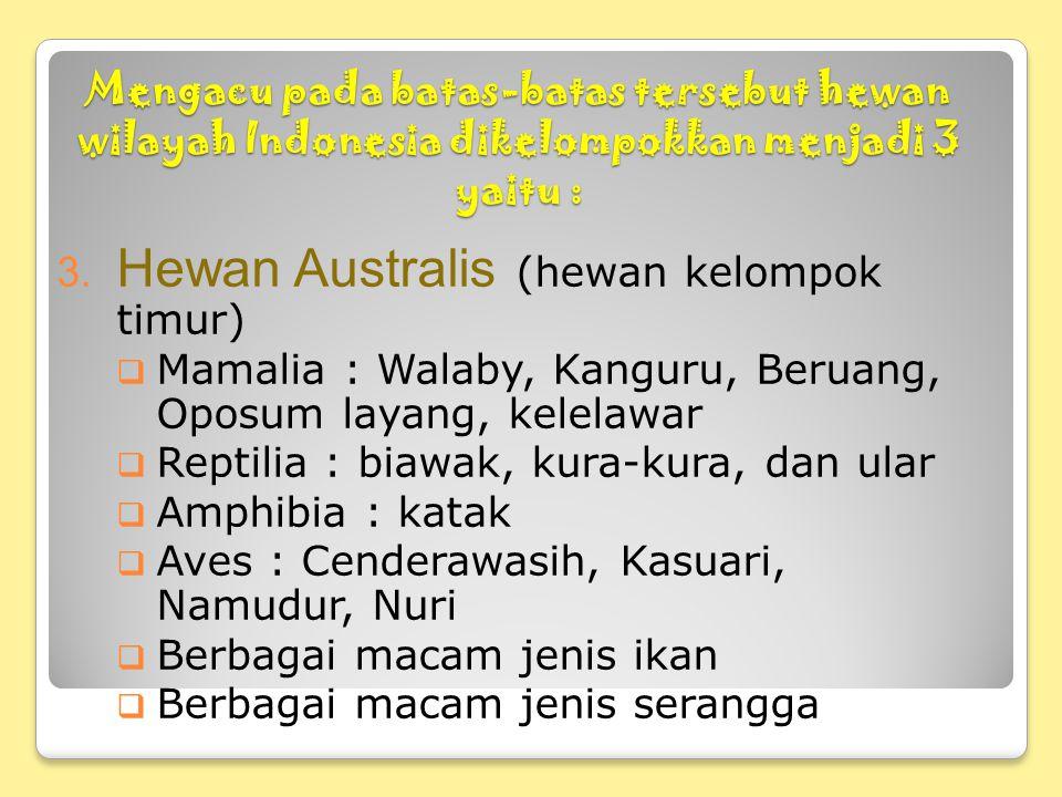 Hewan Australis (hewan kelompok timur)