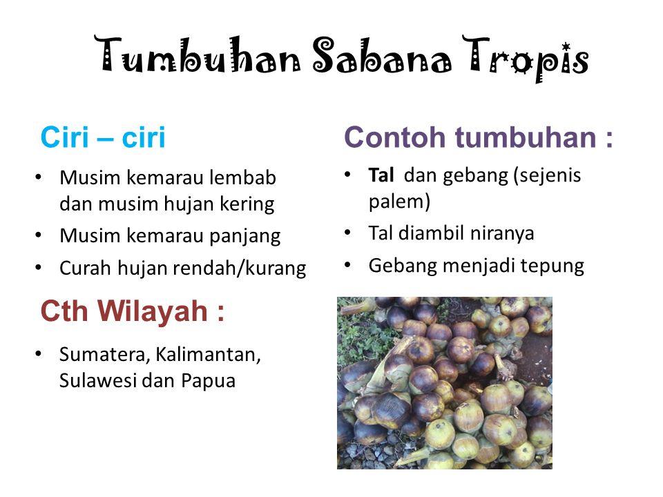Tumbuhan Sabana Tropis
