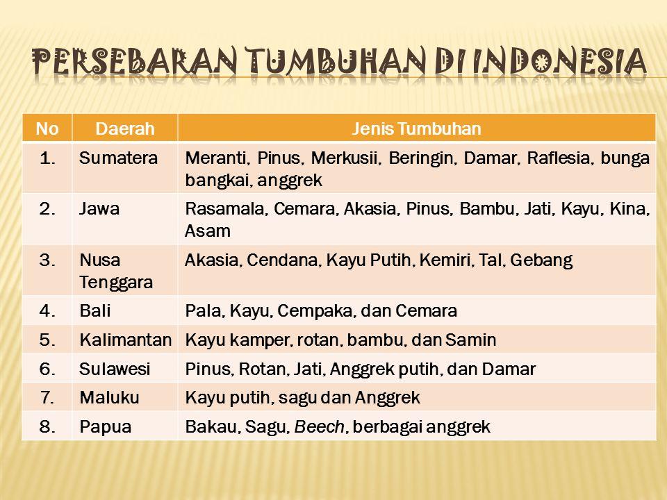 Persebaran tumbuhan di indonesia