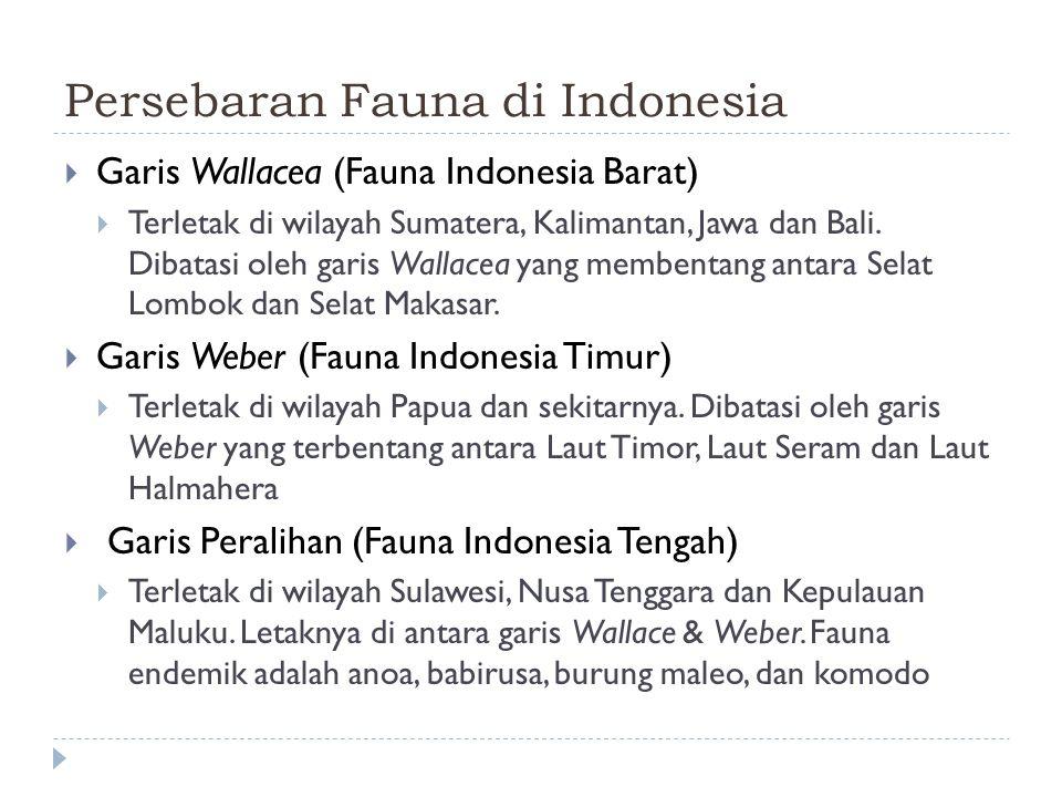 Persebaran Fauna di Indonesia
