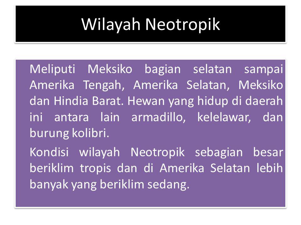 Wilayah Neotropik