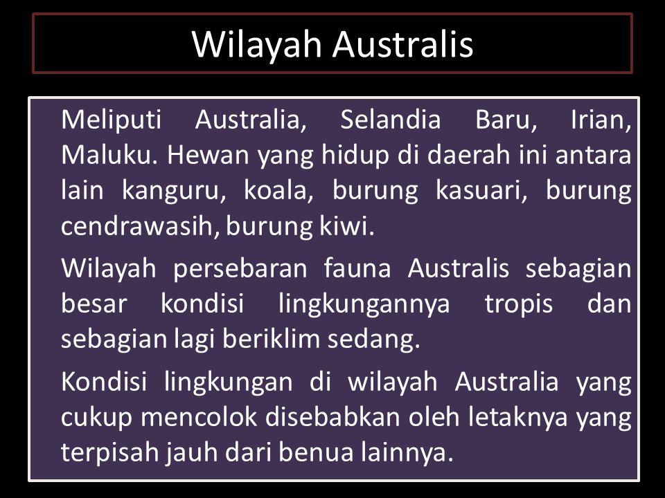 Wilayah Australis