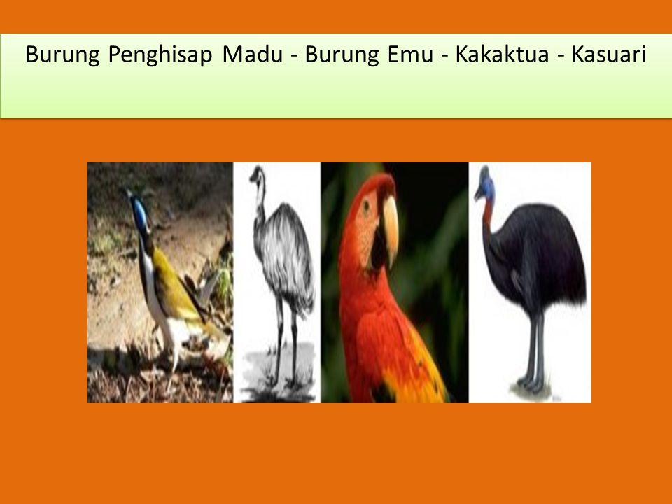 Burung Penghisap Madu - Burung Emu - Kakaktua - Kasuari