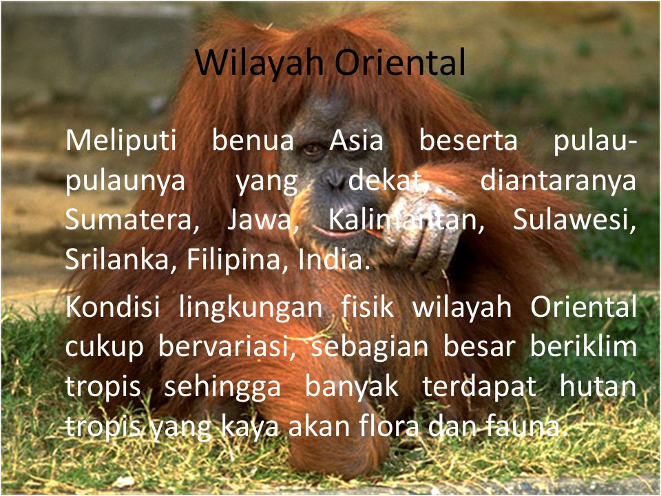 Wilayah Oriental Meliputi benua Asia beserta pulau-pulaunya yang dekat, diantaranya Sumatera, Jawa, Kalimantan, Sulawesi, Srilanka, Filipina, India.