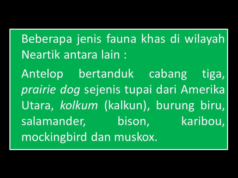 Beberapa jenis fauna khas di wilayah Neartik antara lain :