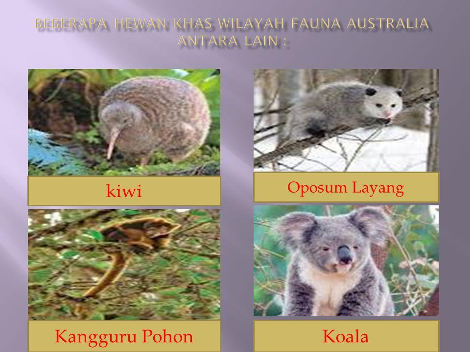 Beberapa hewan khas wilayah fauna Australia antara lain :