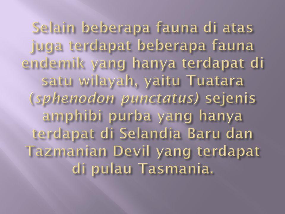 Selain beberapa fauna di atas juga terdapat beberapa fauna endemik yang hanya terdapat di satu wilayah, yaitu Tuatara (sphenodon punctatus) sejenis amphibi purba yang hanya terdapat di Selandia Baru dan Tazmanian Devil yang terdapat di pulau Tasmania.