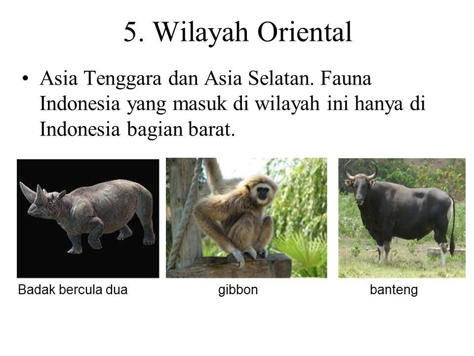 5. Wilayah Oriental Asia Tenggara dan Asia Selatan. Fauna Indonesia yang masuk di wilayah ini hanya di Indonesia bagian barat.