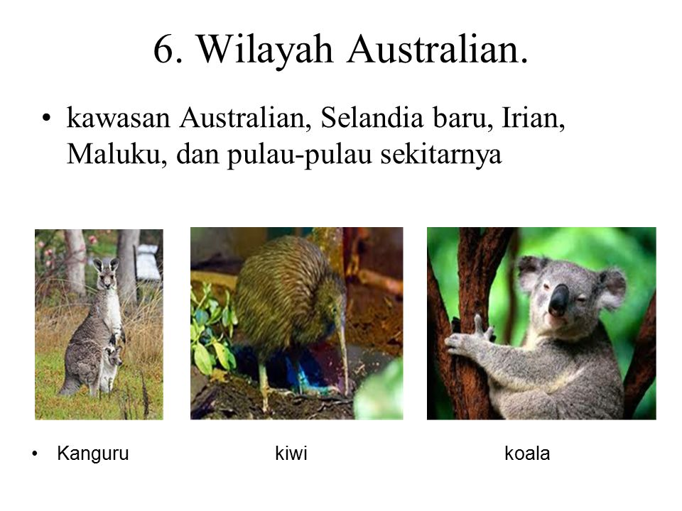 6. Wilayah Australian. kawasan Australian, Selandia baru, Irian, Maluku, dan pulau-pulau sekitarnya.