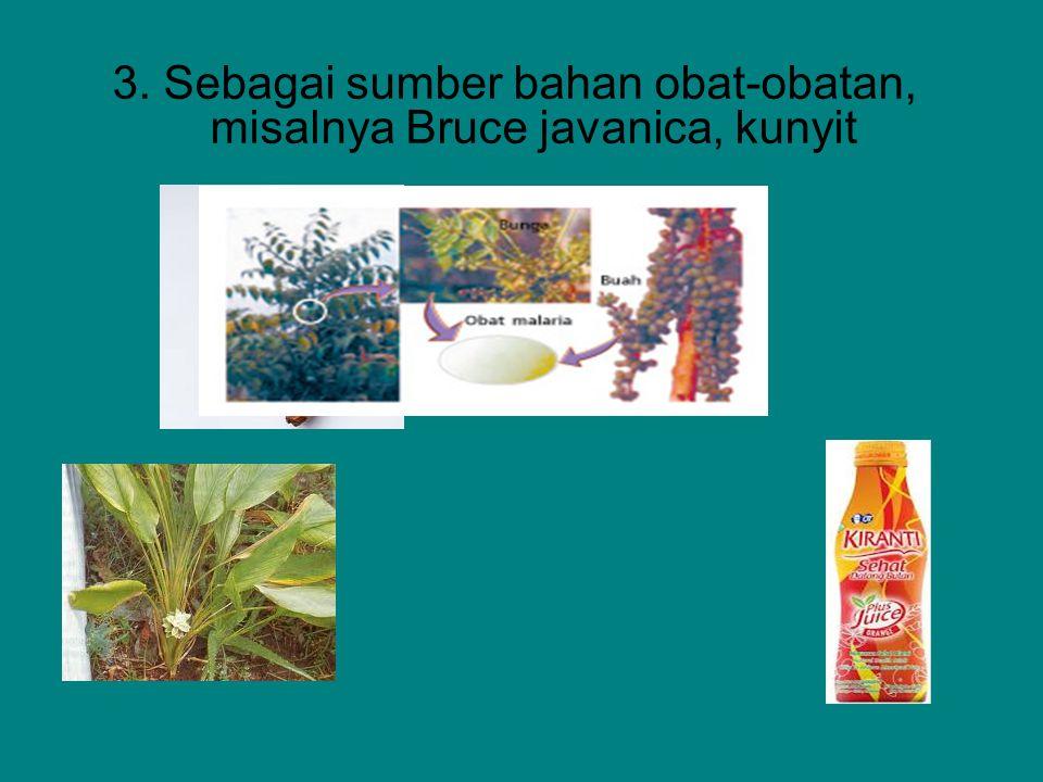 3. Sebagai sumber bahan obat-obatan, misalnya Bruce javanica, kunyit
