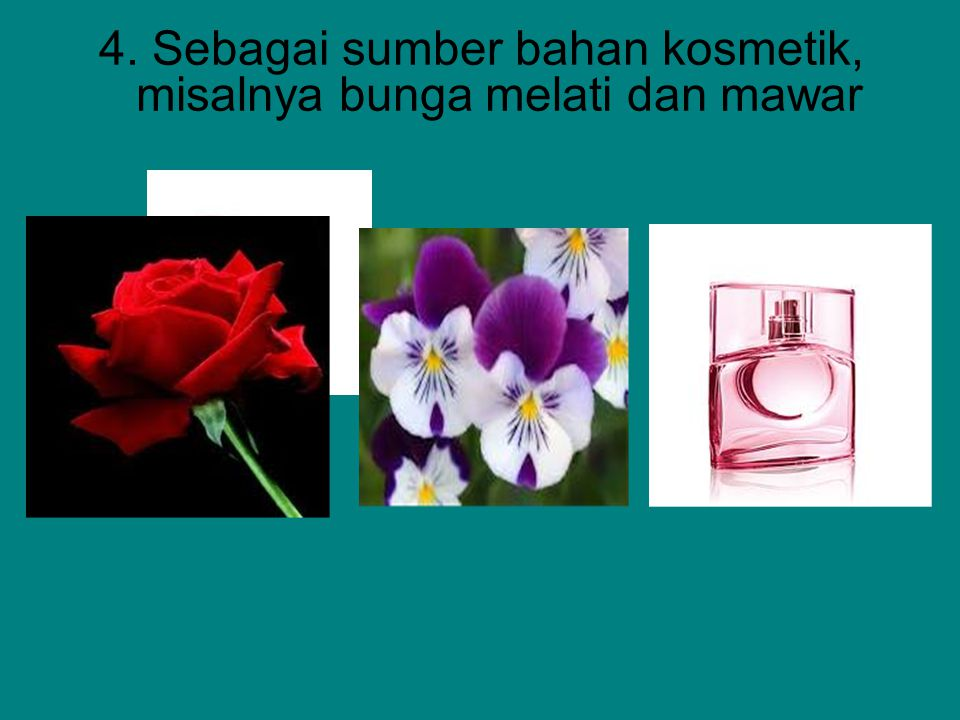 4. Sebagai sumber bahan kosmetik, misalnya bunga melati dan mawar