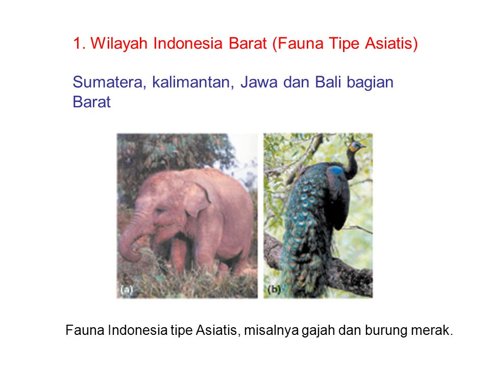 Fauna Indonesia tipe Asiatis, misalnya gajah dan burung merak.