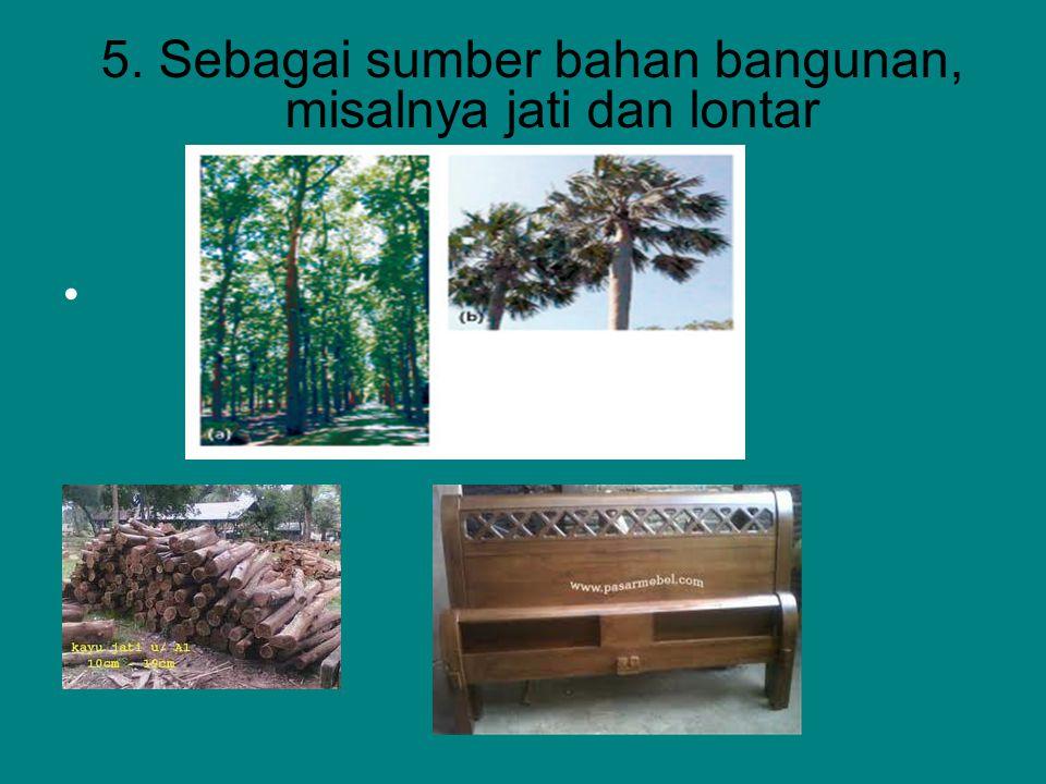 5. Sebagai sumber bahan bangunan, misalnya jati dan lontar
