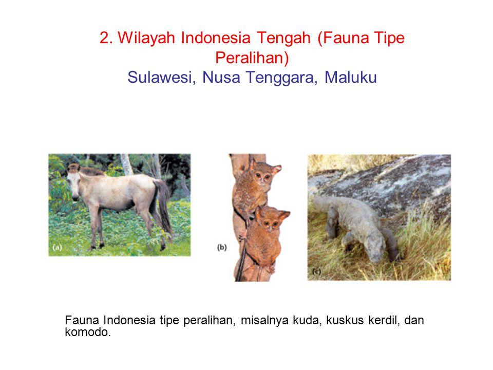 2. Wilayah Indonesia Tengah (Fauna Tipe Peralihan) Sulawesi, Nusa Tenggara, Maluku