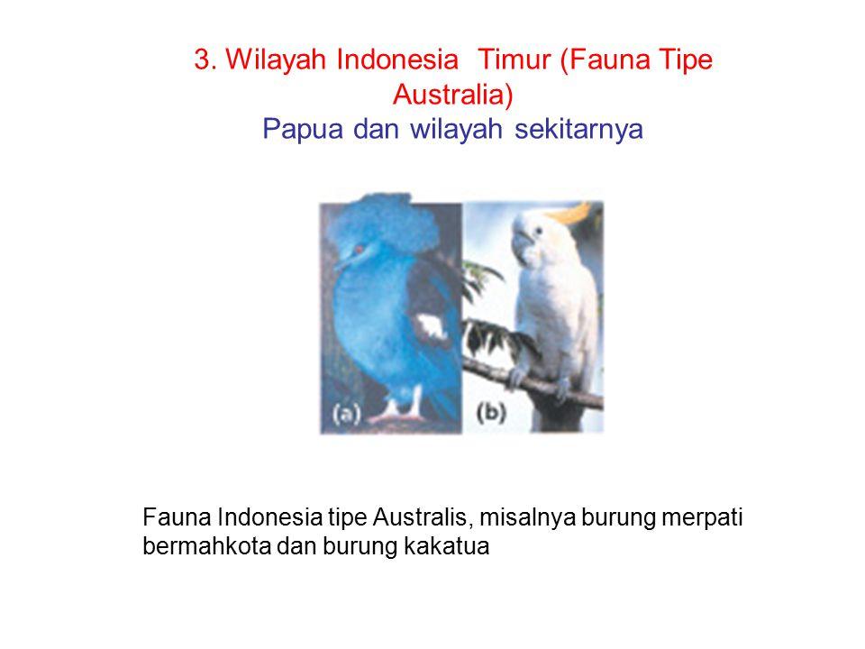 3. Wilayah Indonesia Timur (Fauna Tipe Australia) Papua dan wilayah sekitarnya