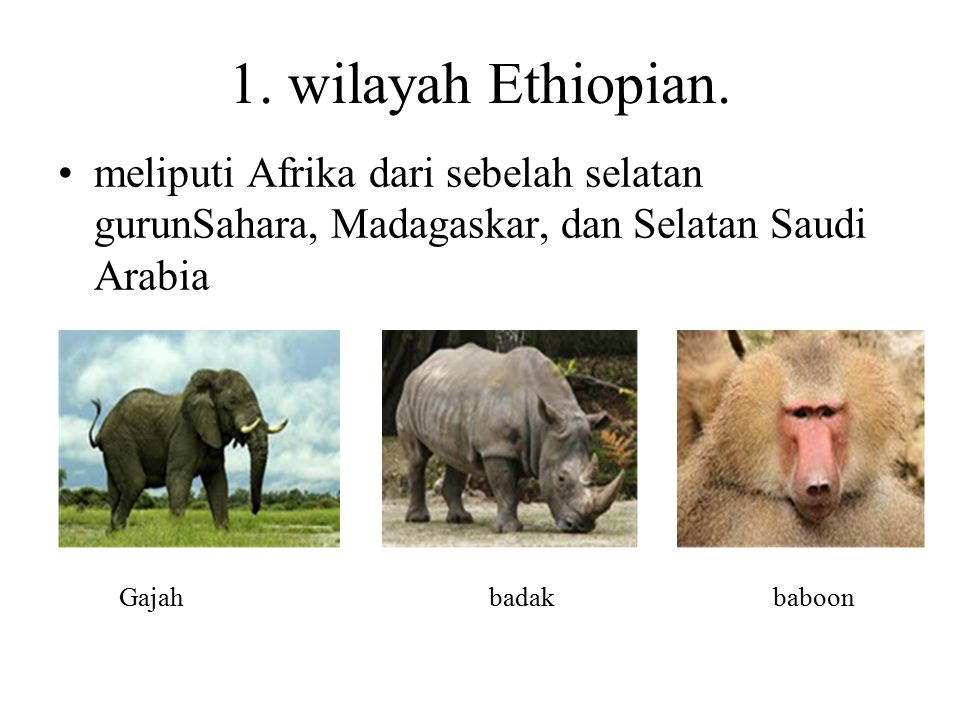 1. wilayah Ethiopian. meliputi Afrika dari sebelah selatan gurunSahara, Madagaskar, dan Selatan Saudi Arabia.