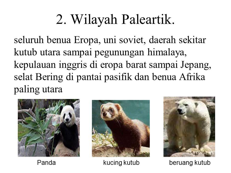 2. Wilayah Paleartik.