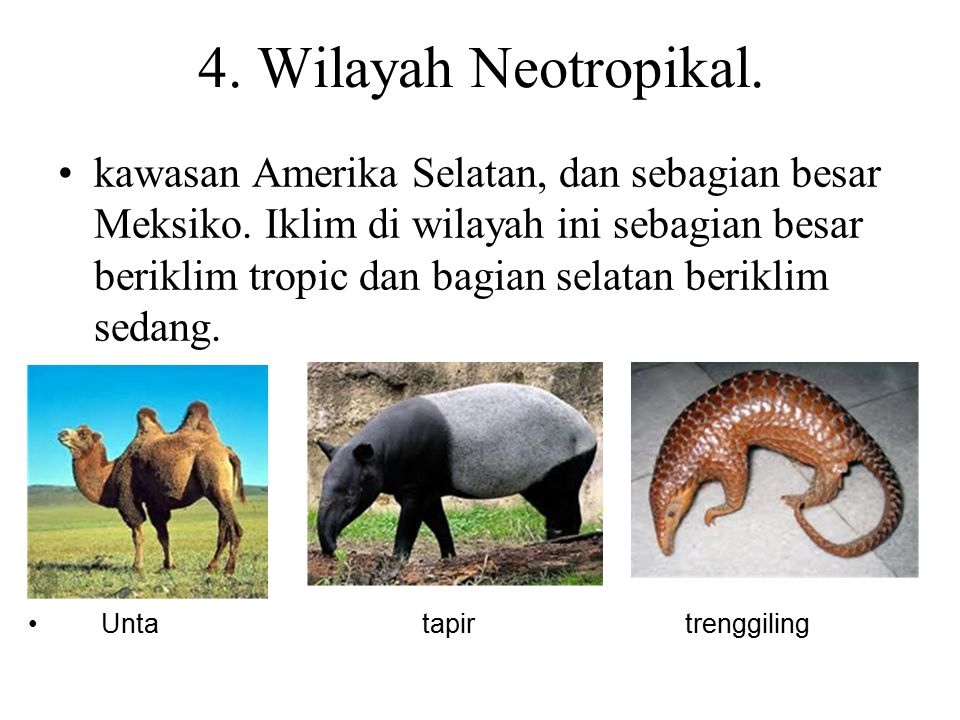 4. Wilayah Neotropikal.