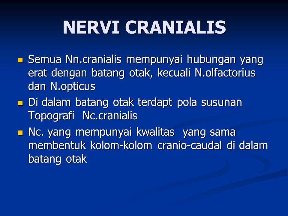NERVI CRANIALIS Semua Nn.cranialis mempunyai hubungan yang erat dengan batang otak, kecuali N.olfactorius dan N.opticus.