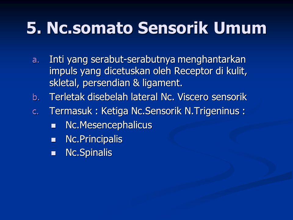 5. Nc.somato Sensorik Umum