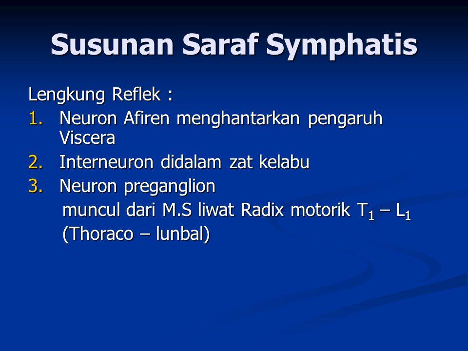 Susunan Saraf Symphatis