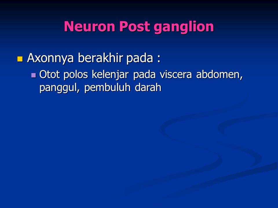 Neuron Post ganglion Axonnya berakhir pada :