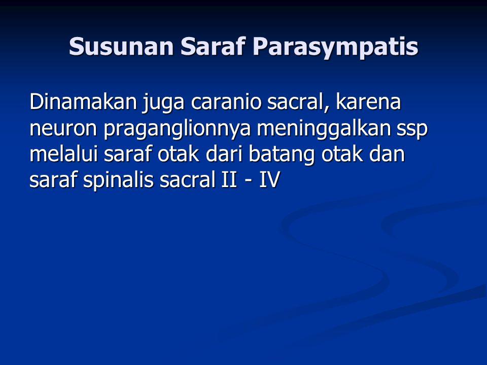 Susunan Saraf Parasympatis
