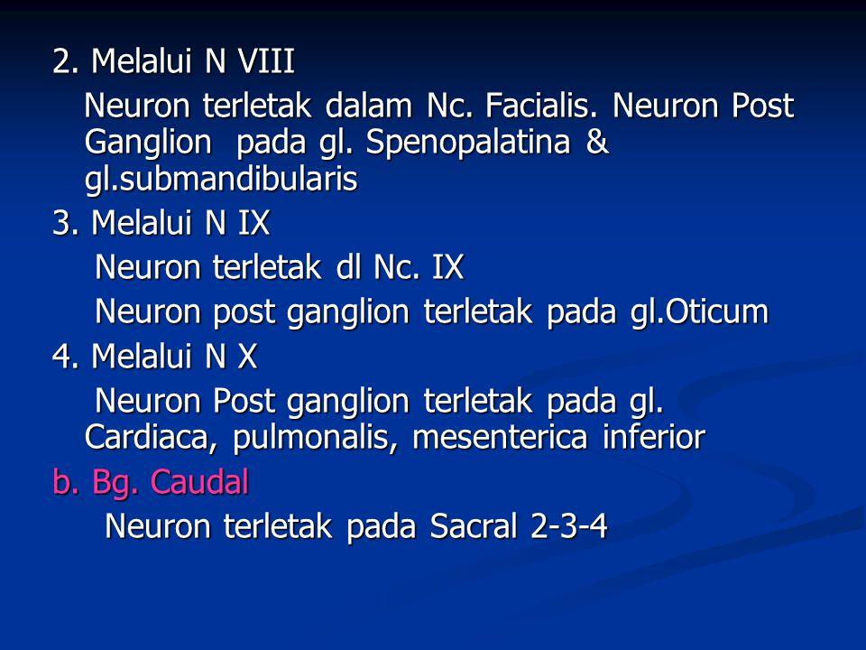 2. Melalui N VIII Neuron terletak dalam Nc. Facialis. Neuron Post Ganglion pada gl. Spenopalatina & gl.submandibularis.