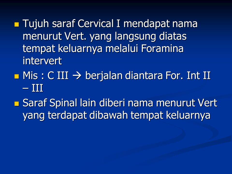 Tujuh saraf Cervical I mendapat nama menurut Vert