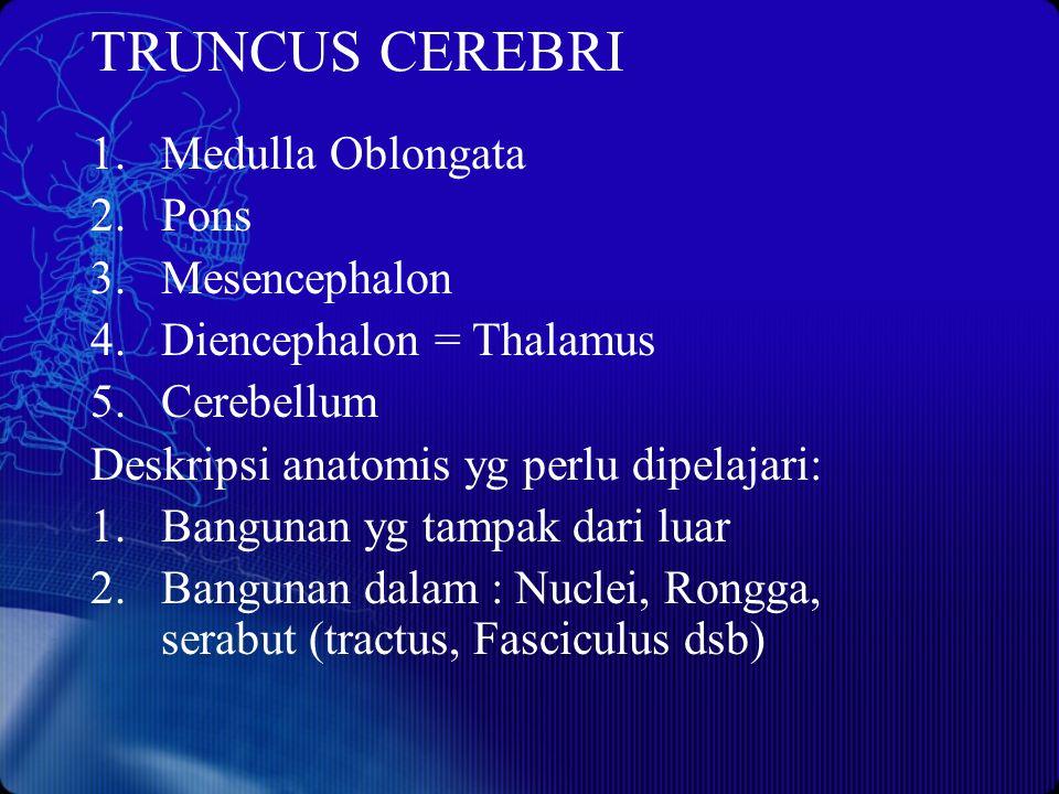 TRUNCUS CEREBRI Medulla Oblongata Pons Mesencephalon