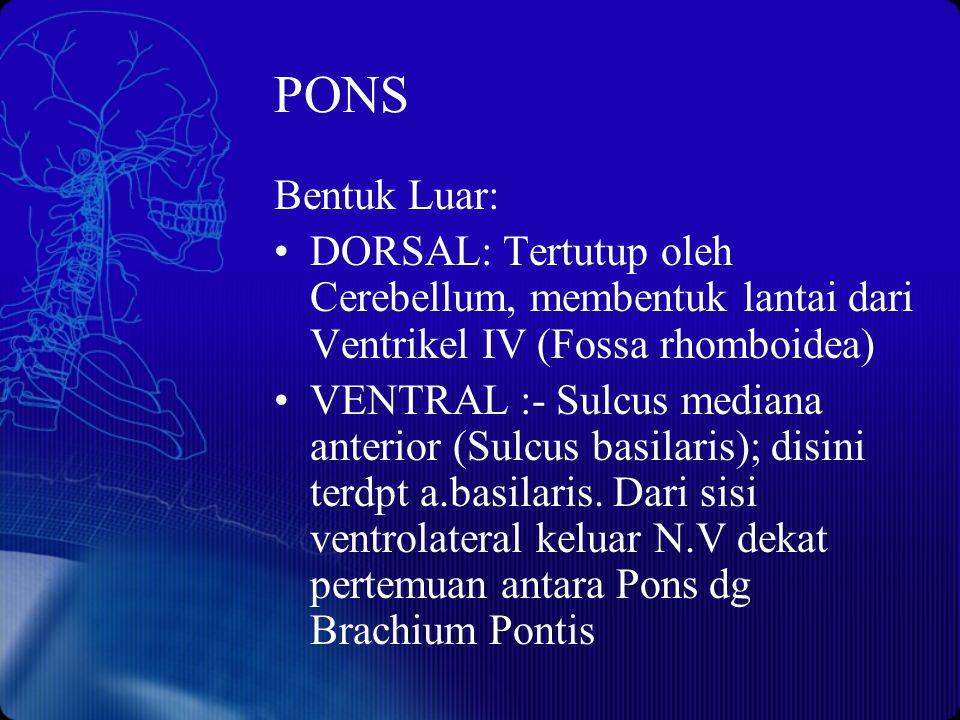 PONS Bentuk Luar: DORSAL: Tertutup oleh Cerebellum, membentuk lantai dari Ventrikel IV (Fossa rhomboidea)