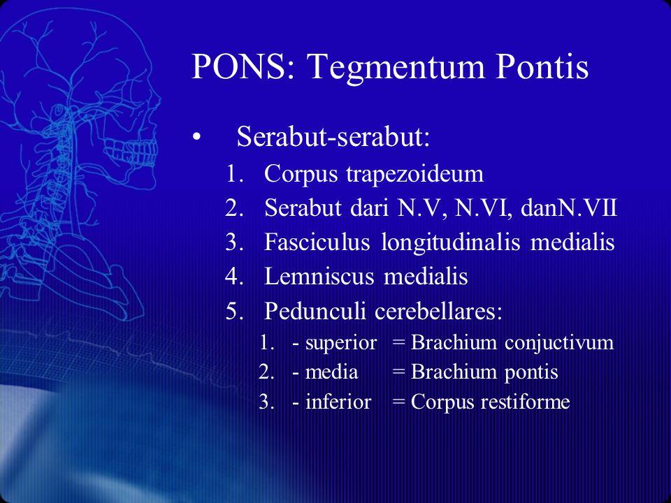 PONS: Tegmentum Pontis