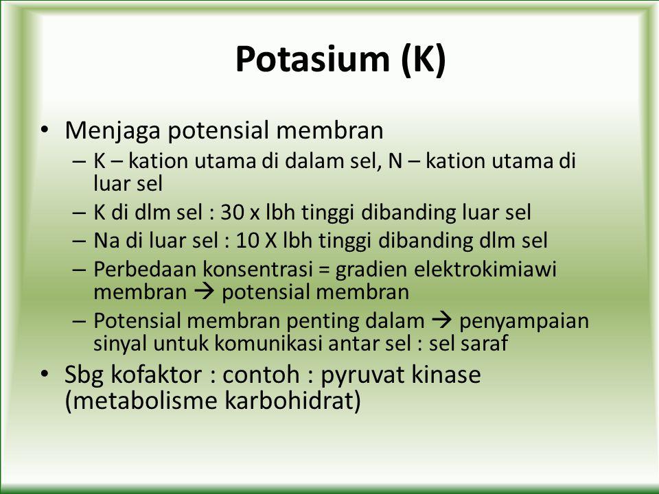 Potasium (K) Menjaga potensial membran