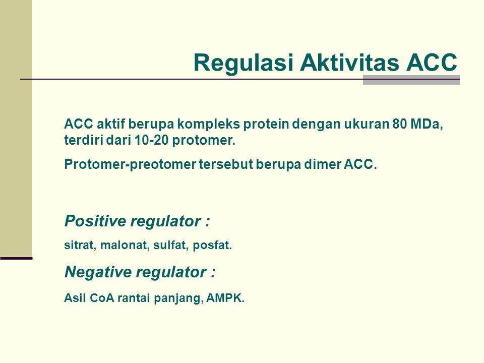 Regulasi Aktivitas ACC