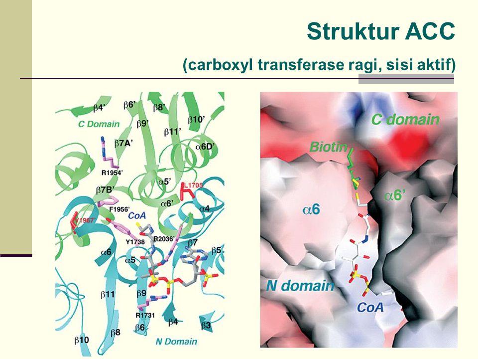Struktur ACC (carboxyl transferase ragi, sisi aktif)