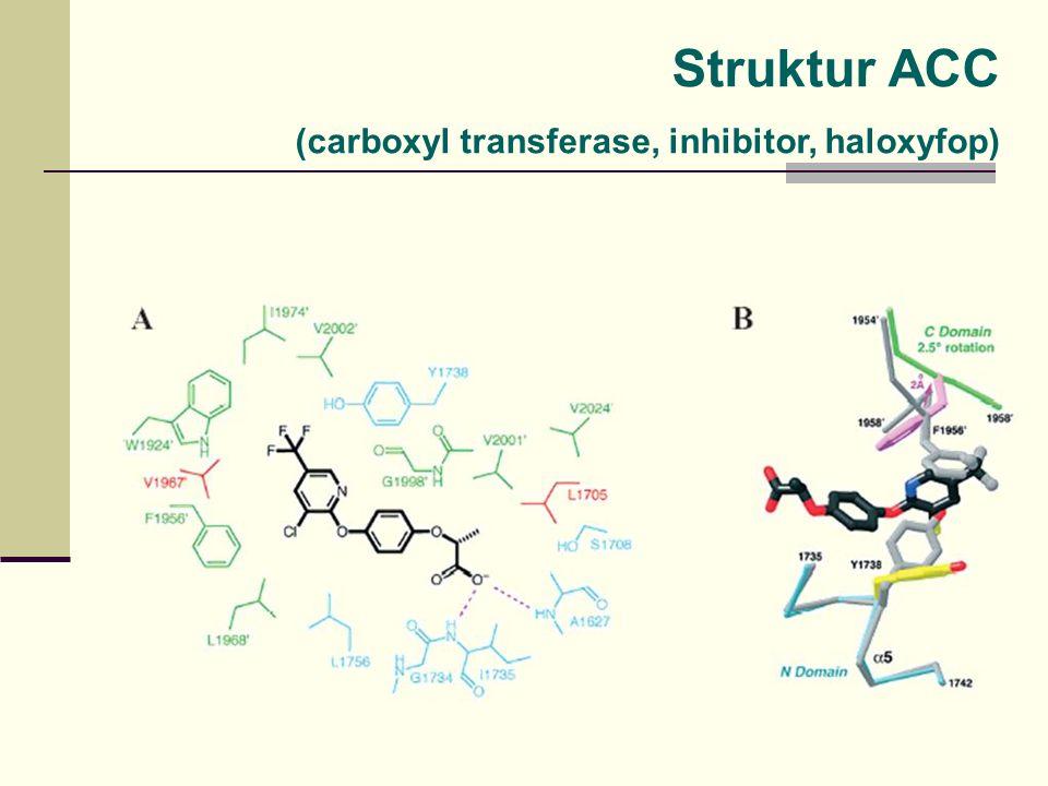 Struktur ACC (carboxyl transferase, inhibitor, haloxyfop)