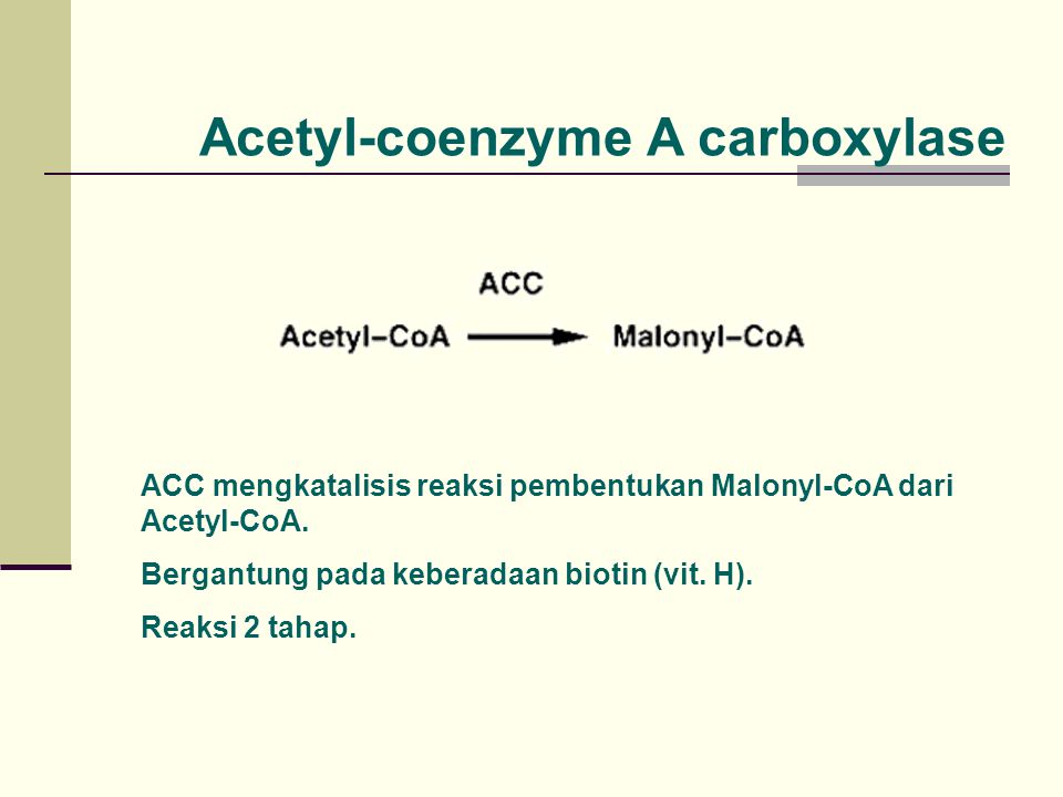 Acetyl-coenzyme A carboxylase